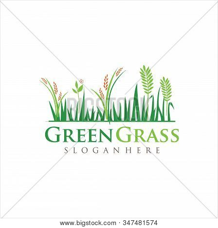 Lawn Care Logo . Turf ,lawn ,grass Logo Design Vector Stock