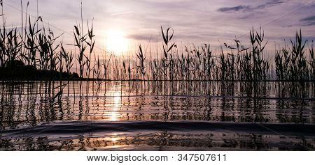 Stunning Picturesque Landscape Of A Summer Lake With Reeds With Calm Water Surface In A Bronze Eveni
