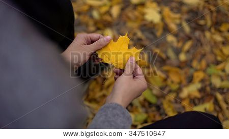 Man Holding Beautiful Yellow Leaf, Thinking About Past, Nostalgia, Gold Autumn