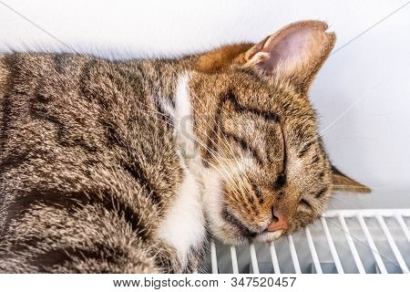 Close Up Portrait Of A Tabby Cat Lying On A Warm Radiator By The Wall On A Cold Winter Day.