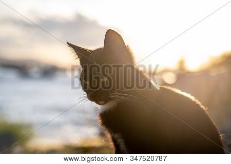 Portrait Of A Young Black Stray Cat Sitting Near The Sea On A Warm Sunny Day. Sun Shining Behind, Cr
