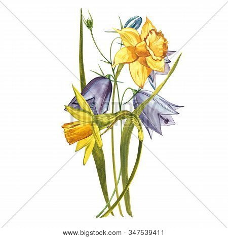 Watercolor Narcissus. Wild Flower Set Isolated On White. Botanical Watercolor Illustration, Yellow N