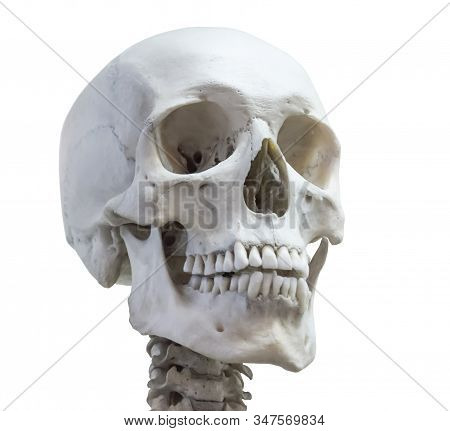 Human Skull Head On The Neck Of The Spine Isolated On A White Background