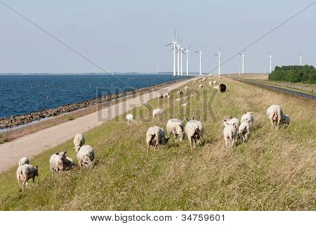 Sheep sea and windturbines in the Netherlands poster