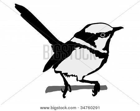 silhouette of wren