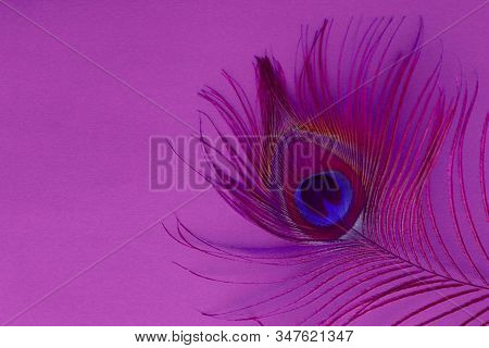 Detail Of Peacock Feather Eye On A Pink Background. Luxury Abstract Texture For Peafowl Wallpaper, P
