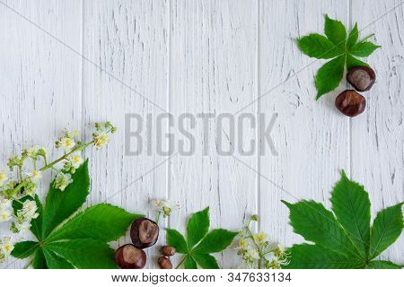 Green Chestnut Leaves, Chestnuts And Flowers On A Light Wooden Background. Banner Design For A Site,