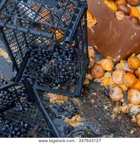 Rotten Mandarin Oranges On The Landfill. Spoilt Citrus Products. Rotten Tropical Fruit. Pile Of Garb