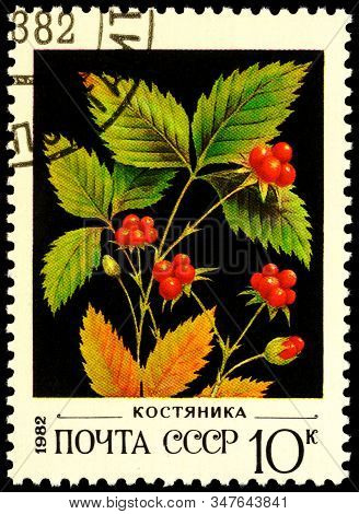 Moscow, Russia - January 26, 2020: Stamp Printed In Ussr (russia) Shows Shrub Of Stone Bramble Or St