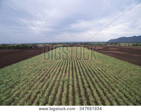 Aerial Of Sugar Cane Field In Thailand