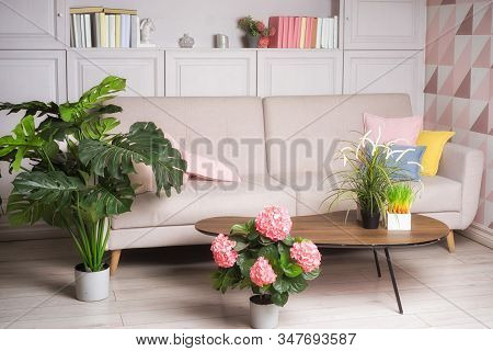 Stylish Interior Of Living Room With Small Design Table, Sofa And Many Plants.