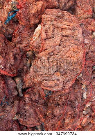 Rotten Carrots In Mesh Bags On The Landfill. Spoilt Products. Pile Of Garbage.