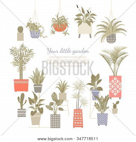 Set Of Vector Illustrations Of Home Plants In Decorated And Macram Pots Isolated On A White Backgrou
