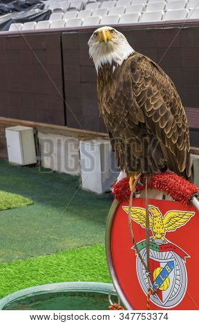 Lisboa, Portugal - April 2018: Eagle - Fc Benfica Club Symbol At Estadio Da Luz