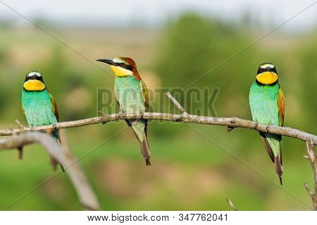Flock Of Beautiful Wild Birds Sits On A Dry Branch