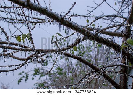 Frozen Twigs Branches Under The Ice, Winter Phenomenon, Ice Trees