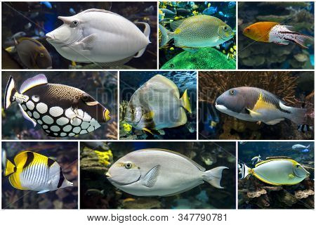 Beautiful Tropical Coral Fish, Coral - Set - Collage