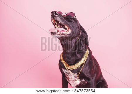 Adorable Black Dog On Pink Background. Funny Pet Portrait. Fashion Dog With Goden Chain And Sunglass