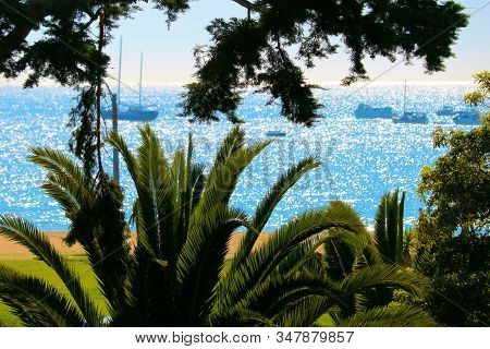 Lush Plants And Palm Trees Overlooking The Pacific Ocean With Sail Boats And Yachts Taken On The Cal