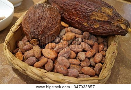Dry Cacao Pod With Heap Of Roasted Cacao Beans In A Chocolate Shop In Peru