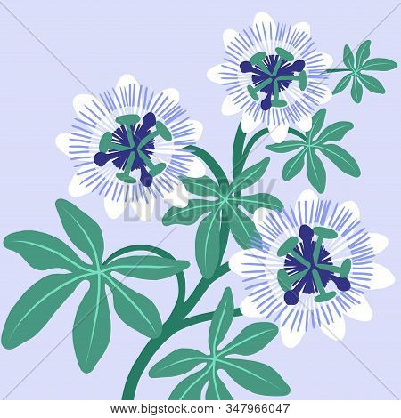 Passionflower On Blue Background. Hand-drawn Botanic Illustration