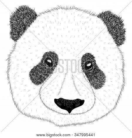 Panda Animal Cute Face. Asian Panda Bear Head Portrait. Realistic Fur Portrait Funny Black And White