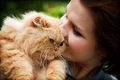 Young woman with Persian cat playing. Outdoors portrait poster