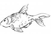 sketch of inhabitant of reservoirs of earth of large fish poster