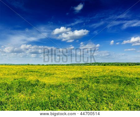 Spring summer background - blooming flowers field meadow with blue scy