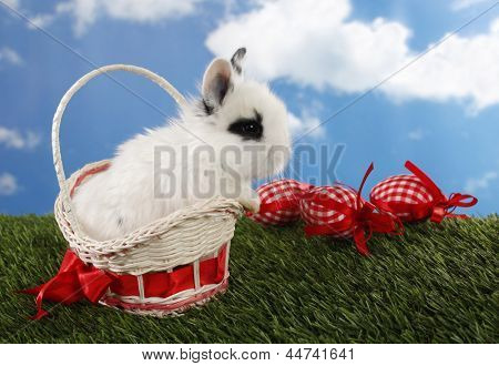 Lovely white Easter bunny in basket and eggs