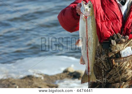 Steelhead Trout Catch