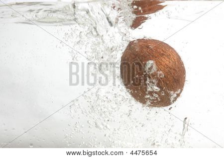 Alone Shaggy Coconut In Water