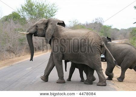 Elephants at Kruger National Park