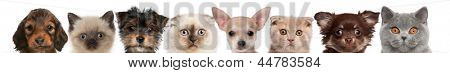 group of cropped view of Cat and Dog heads isolated on white