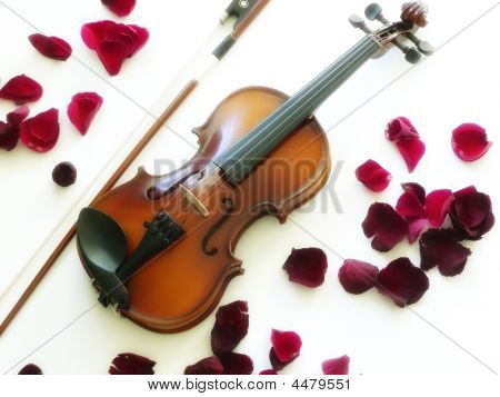 Violin With Rose Petals