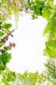 Freshly harvested herbs, herbs frame over white background poster