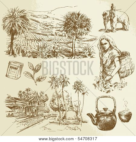 tea plantations - hand drawn set