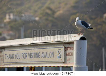 Avalon Farewell Sign With Bird