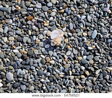 Various sea pebbles and seashell on shore poster