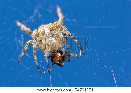 Big Spider Eats Small