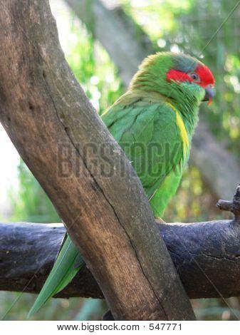 musk parrot poster