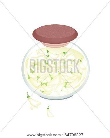 Jar Of Pickled Sesban Agasta In Malt Vinegar