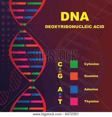 Structure of Deoxyribonucleic Acid (DNA)