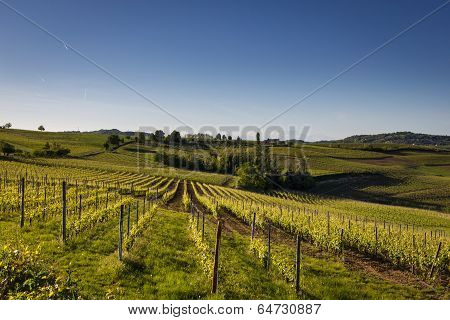Wine Hills, Piedmont, Italy