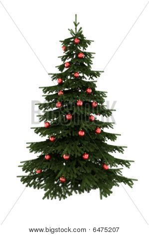 christmas tree with red balls isolated on white background with clipping path