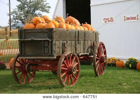 Trailor Full Of Pumpkins