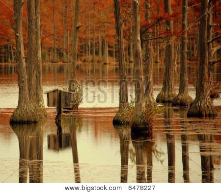 Wood duck houses and cypress