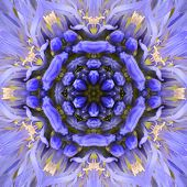 Purple Concentric Flower Center Close-up. Mandala Kaleidoscopic design poster