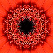 Red Concentric Flower with Black Center Close-up. Mandala Kaleidoscopic design poster