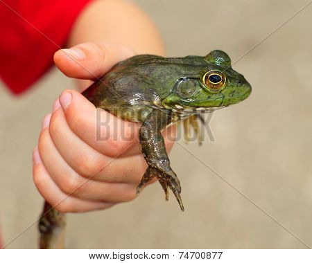 Boy holding a large green frog